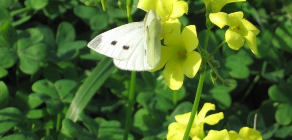 non-solo-fiori-2.jpg