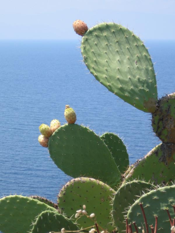 Sicily-2.jpg